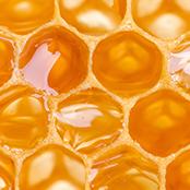 蜂蜜萃取物